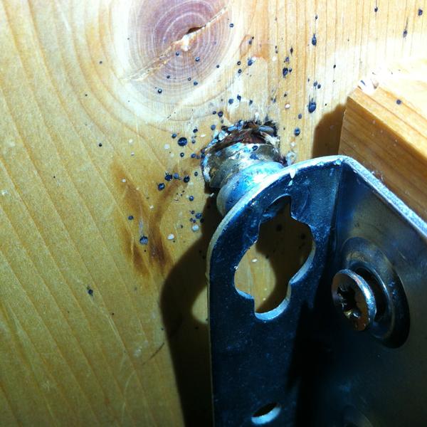 bettwanzen hnliche insekten in der wohnung inspiration design raum und m bel. Black Bedroom Furniture Sets. Home Design Ideas